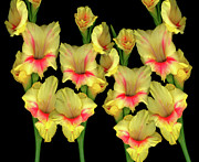 High Resolution Prints Prints - Gladiola Group Print by Christopher Gruver