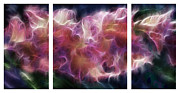 Digital Modified Prints - Gladiola Nebula Triptych Print by Peter Piatt