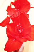 Gladiolas Digital Art Prints - Gladiola Stem Print by Cathie Tyler