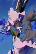 Digital Modified Prints - Gladioli Print by Heiko Koehrer-Wagner