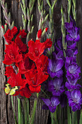 Red Gladiolus Photos - Gladiolus and butterfly by Garry Gay