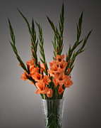 Gladiolus Photos - Gladiolus Portrait. by Terence Davis