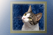 Cat Art Photos - Glamour Girl by Andee Photography
