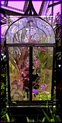 Wet Orchids Framed Prints - Glass Green House Framed Print by Mindy Newman