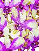 Filter Prints - Glassy Orchids Print by Joe Carini - Printscapes