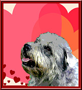 Glen Of Imaal Terrier Print by One Rude Dawg Orcutt