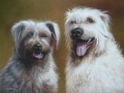 Terriers Pastels - Glen Of Imaal Terriers by Mark Whittaker