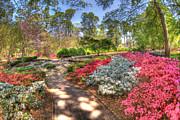 Mark Stewart - Glencairn Gardens