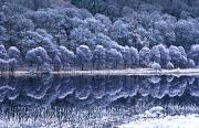 Trees Reflecting In Water Metal Prints - Glendalough National Park, County Metal Print by Richard Cummins