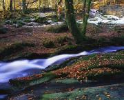 Rivers In The Fall Photo Prints - Glenmacnass Waterfall, Co Wicklow Print by The Irish Image Collection