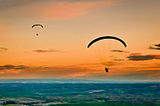 Glider Framed Prints - Gliders Framed Print by Niels Nielsen