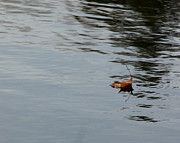 Gliding Across The Pond Print by LeeAnn McLaneGoetz McLaneGoetzStudioLLCcom