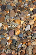 Vineyard Art Posters - Glistening Rocks on the Beach Poster by Carol Groenen