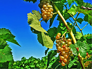 Grape Vine Photo Originals - Globes of Light by William Fields