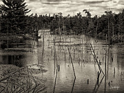 Lakes Digital Art - Gloomy Lake by Phill  Doherty