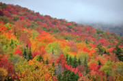 New England Fall Foliage Prints - Glorious Print by Betty LaRue