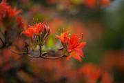 Glorious Blooms Print by Mike Reid