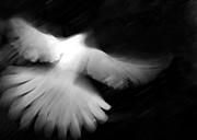 Black White Spiritual Angel Art Prints - Glory Print by Glennis Siverson