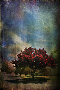 Red Leaves Prints - Glory Print by Laurie Search