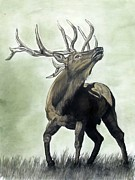 Elk Drawings - Glory by Melissa Fuller