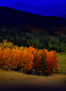 Rocky Mountains Digital Art - Glowing Aspen by Ellen Lacey