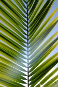Frond Posters - Glowing Frond Poster by Kelly Wade