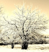 Snow Posters Digital Art Posters - Glowing Golden Tree Poster by Marsha Heiken