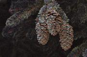 Colorado Mountain Greeting Cards Prints - Glowing Pinecones Print by James Steele
