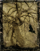 Corvus Framed Prints - Gnarled and Twisted Tree with Crow Framed Print by Gothicolors And Crows