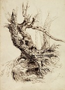Outdoors Drawings Posters - Gnarled Tree Trunk Poster by Thomas Cole