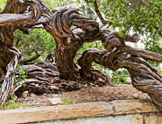 Gnarly Tree I Print by Bernard  Barcos
