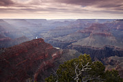 South Rim Prints - Gnarly Tree in the Canyon Print by Andrew Soundarajan