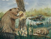 Beaver Pond Paintings - Gnawing Beaver by Barbara McGeachen