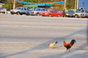 Roosters Photos - Go Ahead Cross The Road by Jan Amiss Photography