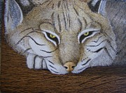 Bobcat Paintings - Go Away by Rick Sirmons