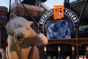Comerica Framed Prints - Go Get Um Tiger Framed Print by Dawn Williams