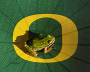 Oregon Ducks Prints - Go Oregon Ducks Print by Cindy Wright