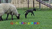Hair Sheep Photo Prints - Go outside and play Rainbow Print by LeeAnn McLaneGoetz McLaneGoetzStudioLLCcom