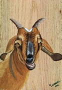 Goat Painting Originals - Goat by Debbie LaFrance