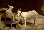 Farmyard Animals Posters - Goat Family in sepia Poster by Suzanne Gaff