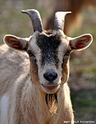 Sherri Brown - Goat Headshot