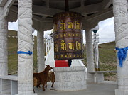 Holly Eagleston - Goat Prayer Wheel