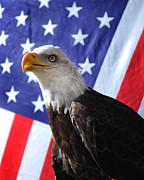 American Eagle Photos - God Bless Our Heros by Adele Moscaritolo