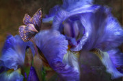 Purple Iris Prints - Goddess Of Mystery Print by Carol Cavalaris