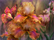 Iris Posters - Goddess Of Sunrise Poster by Carol Cavalaris