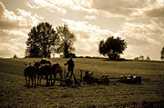 Amish Farmer Photos - Gods Country by Trish Tritz