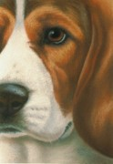 Doggy Pastels Framed Prints - Goggie Beagle Framed Print by Karen Coombes