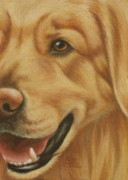 Doggy Pastels Framed Prints - Goggie Golden Framed Print by Karen Coombes