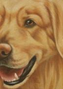 Goggie Golden Print by Karen Coombes