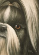 Toy Pastels Posters - Goggie Shih Tzu Poster by Karen Coombes